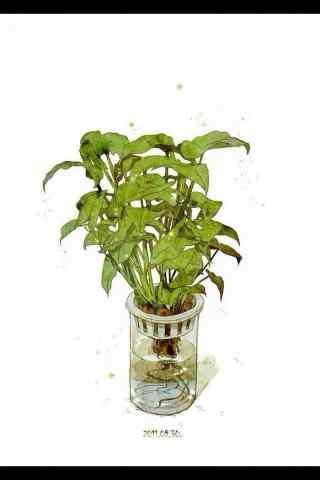 小清新绿色植物盆栽绿萝手机壁纸