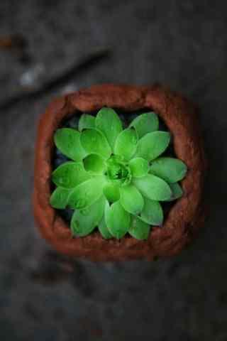 唯美绿色多肉植物