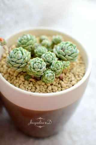 可爱的绿色植物手