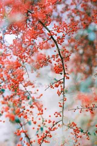 小清新春日花朵手