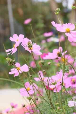 唯美的春日花朵手