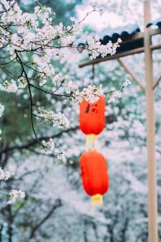 浪漫春日樱花林手机壁纸