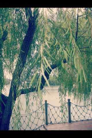 清明节习俗-唯美柳树风景手机壁纸