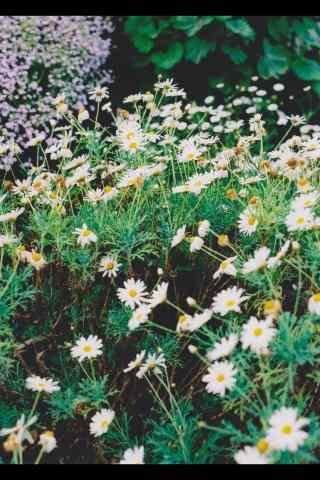 清明踏青可爱花朵