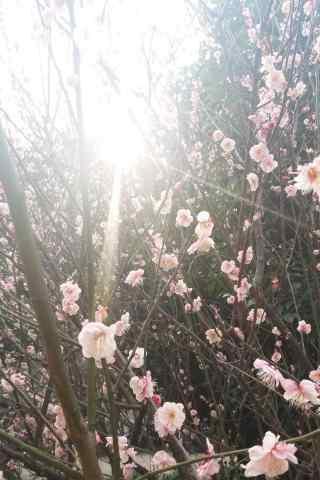 清明踏青唯美鲜花
