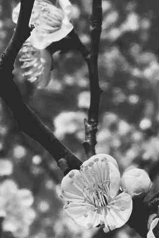 清明踏青文艺花朵