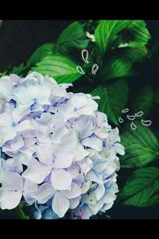 唯美紫色绣球花手机壁纸