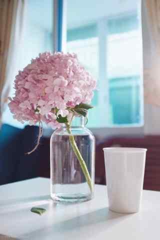 粉色的绣球花盆栽