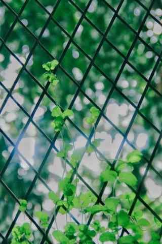 小清新文艺薄荷缠绕栅栏手机壁纸