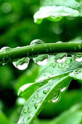水滴和绿色植物手