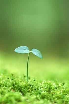 小清新绿色小芽手