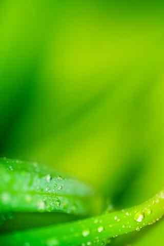 唯美的绿色植物高