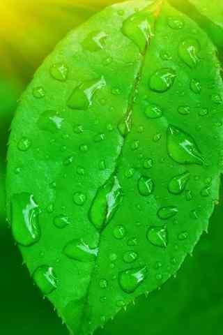 小清新绿色树叶手