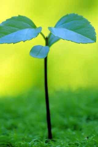 绿色嫩芽手机壁纸