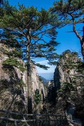 唯美好看的黄山上的松树手机壁纸