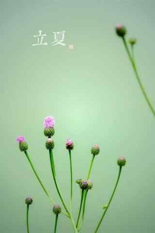 2017年立夏小清新植物手机壁纸