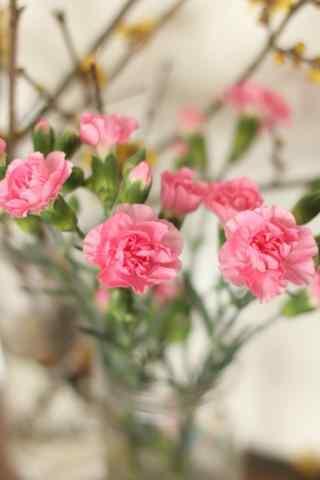 文艺清新粉色康乃馨手机壁纸