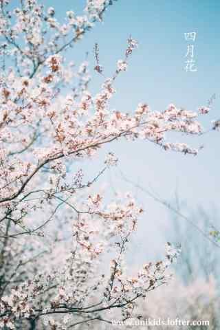 唯美日系杏花林手机壁纸