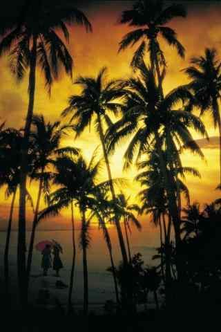 美丽的椰树手机壁纸