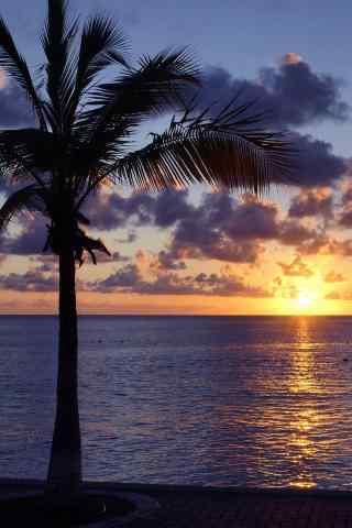 黄昏时海边的椰树手机壁纸