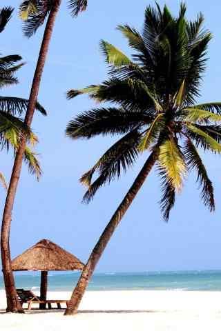 海边的椰树手机壁纸