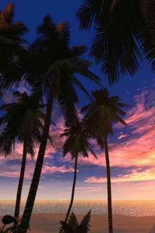 晚霞下的椰树高清手机壁纸