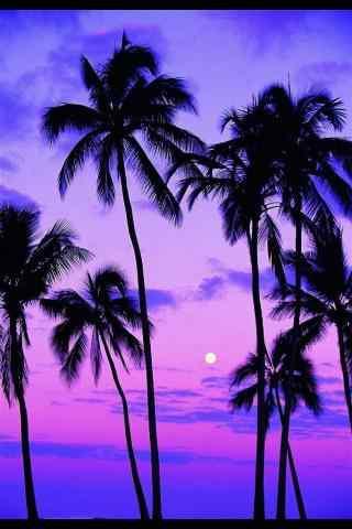 唯美的椰树手机壁纸