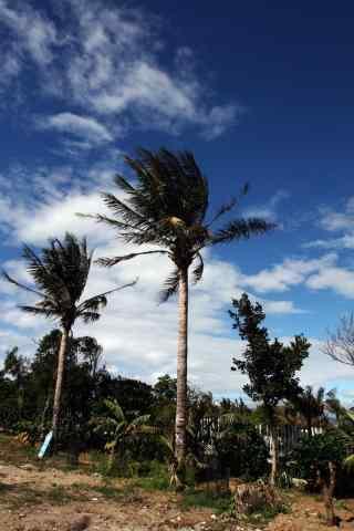 海边的椰树高清手机壁纸