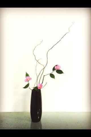 小清新艺术品植物