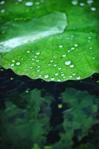 雨中的绿色荷叶手机壁纸