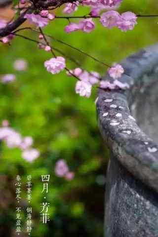 北京故宫四月花开