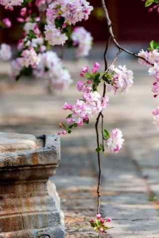 北京故宫好看的花