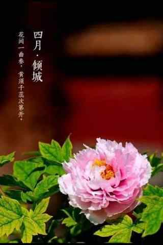 北京故宫鲜花手机