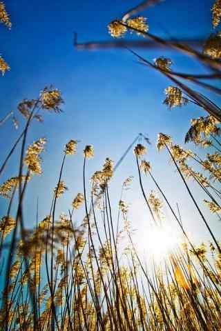 阳光下的植物手机壁纸