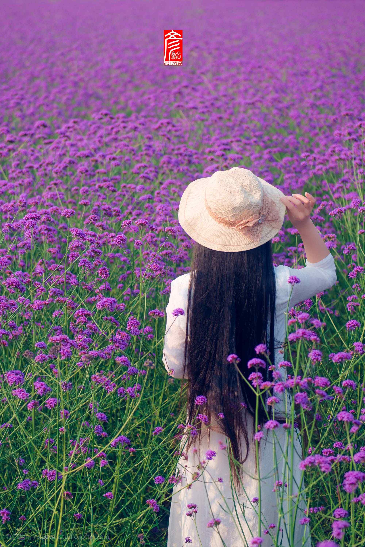 马鞭草花海中的少女背影手机壁纸