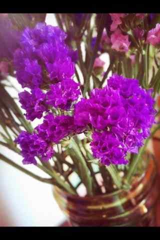 好看的紫色勿忘我
