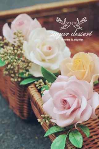 小清新好看的玫瑰