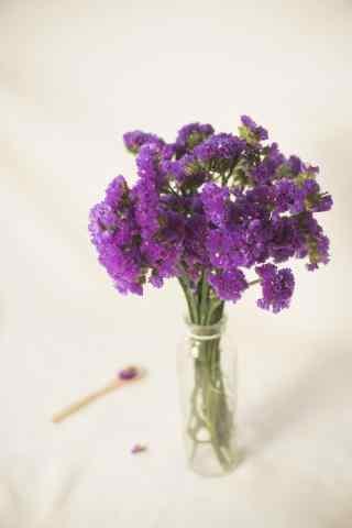 小清新唯美紫色勿