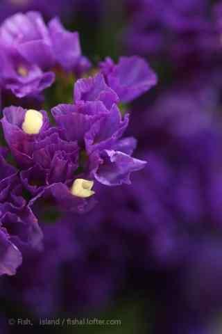 小清晰好看的紫色