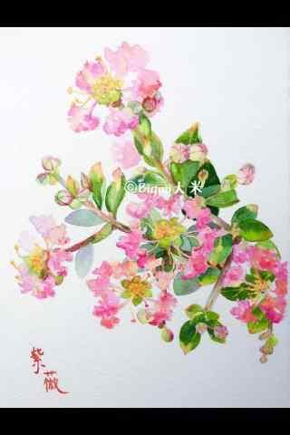 好看的紫薇花(hua)手繪手機壁紙(zhi)