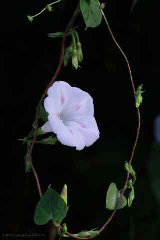 唯美淡紫xian) E;ㄊ只bi)紙