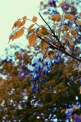 唯美好看的紫藤萝