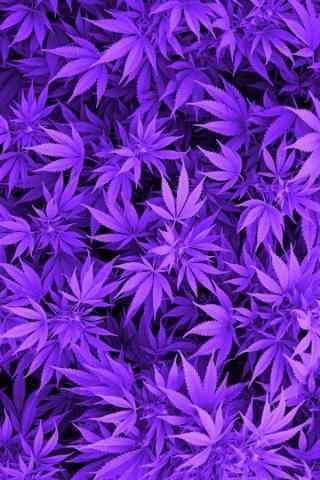 壁纸   分类: 花