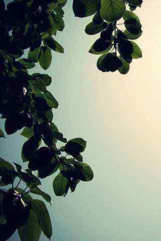 高清风景植物手机