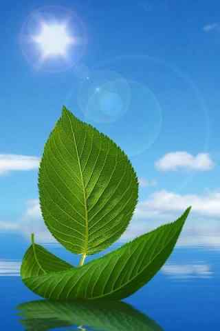 清新绿色植物手机