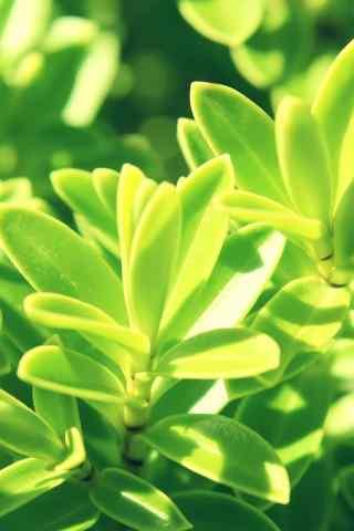 高清自然植物640*
