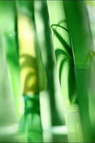 翠绿竹子绿色护眼