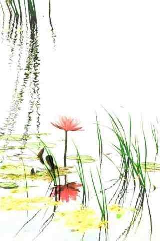 手绘清新莲花手机壁纸