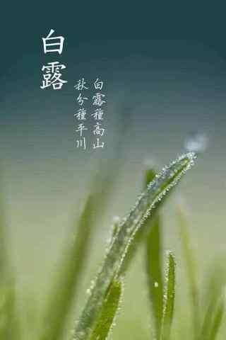 2017白露节气绿色小草手机壁纸