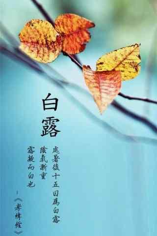2017白露节气秋日落叶手机壁纸